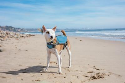 Outward Hound Dawson Dog Life Jacket in Blue